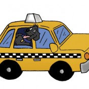 The Importance of Public Liability Insurance for Taxi Drivers